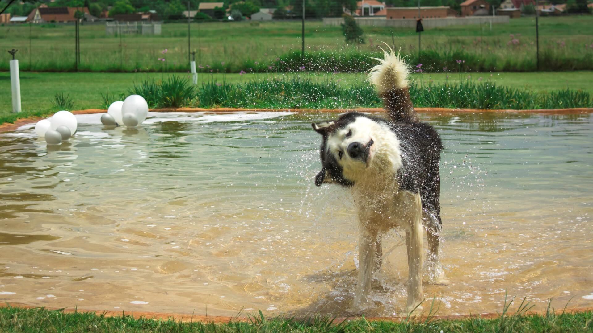 Splish Splashing Away