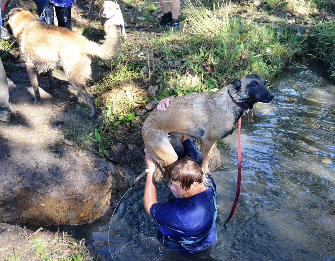 muddy puppy