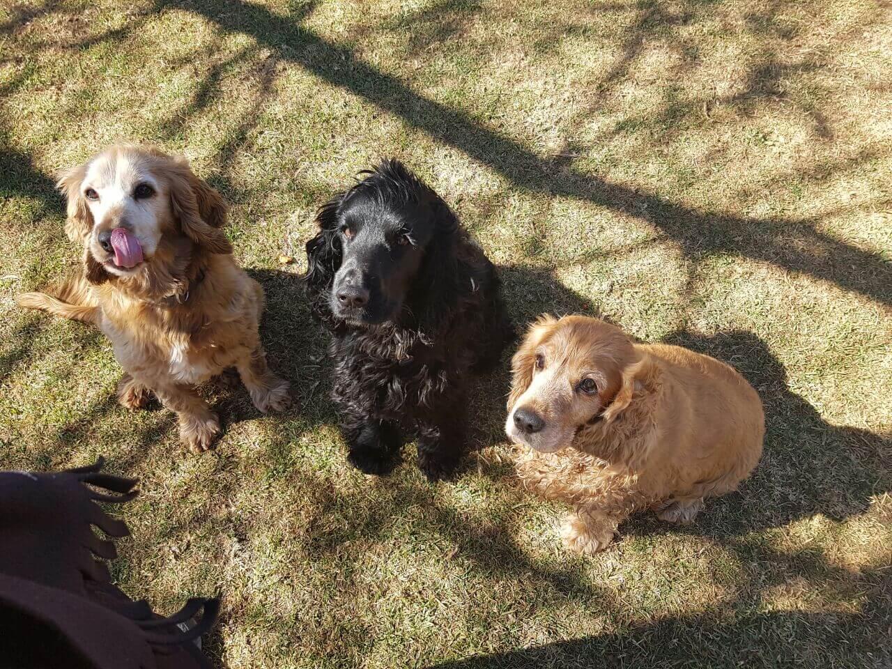 Brutus, George & Cleo