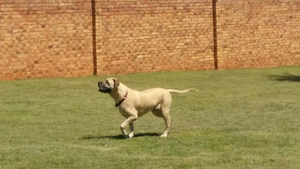 "Casey aka ""Bubba"" canine sports centre"