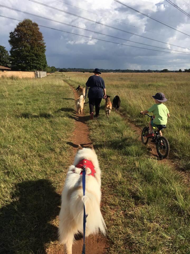 Yogi walking with his CSC buddies as training loving it!
